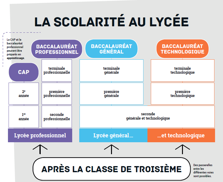 scol_lycee.png